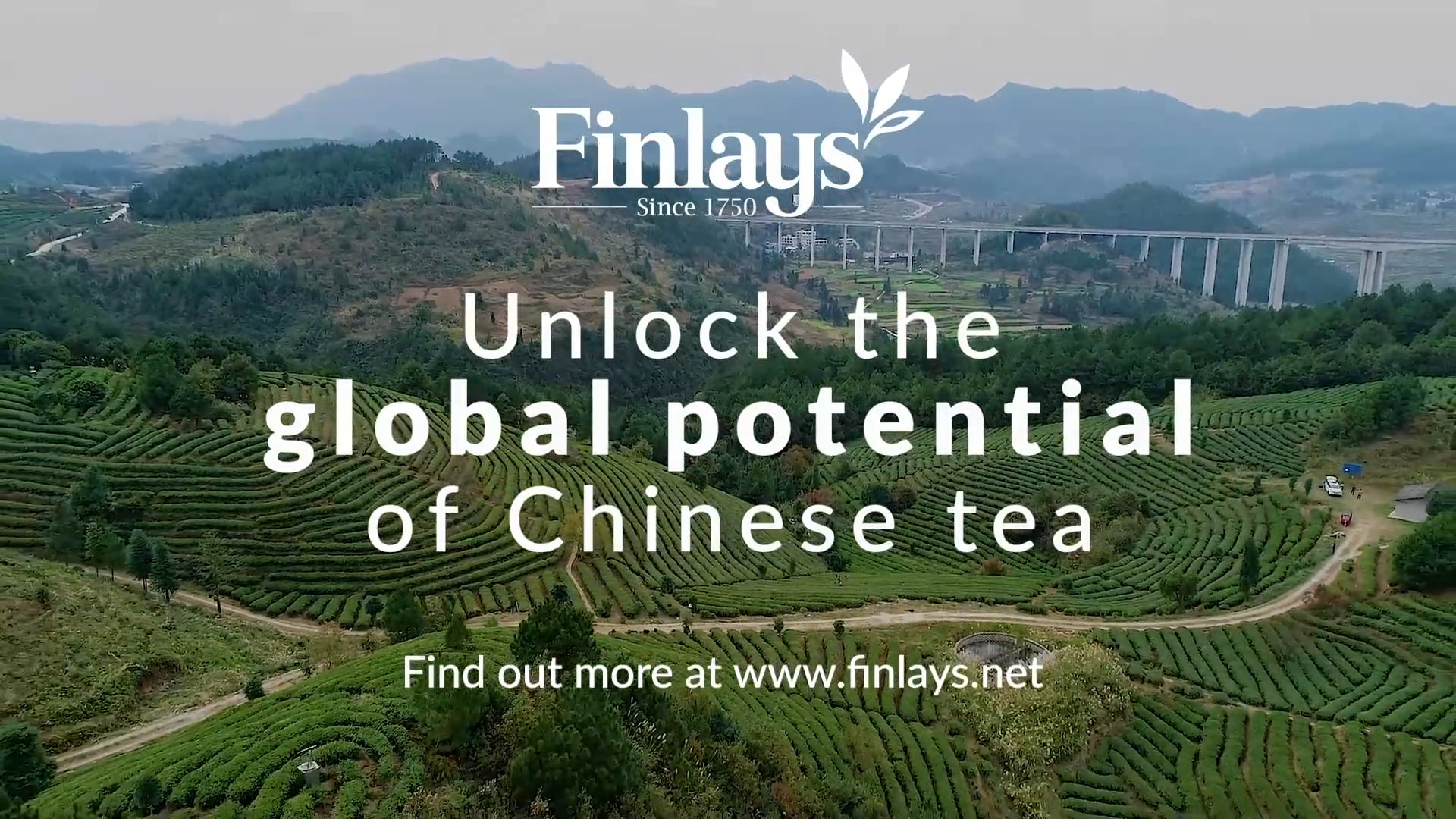 Unleash The Potential of Chinese Tea With James Finlay Guizhou