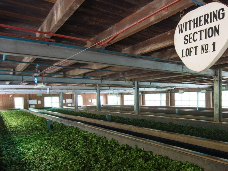 inside tea processing factory