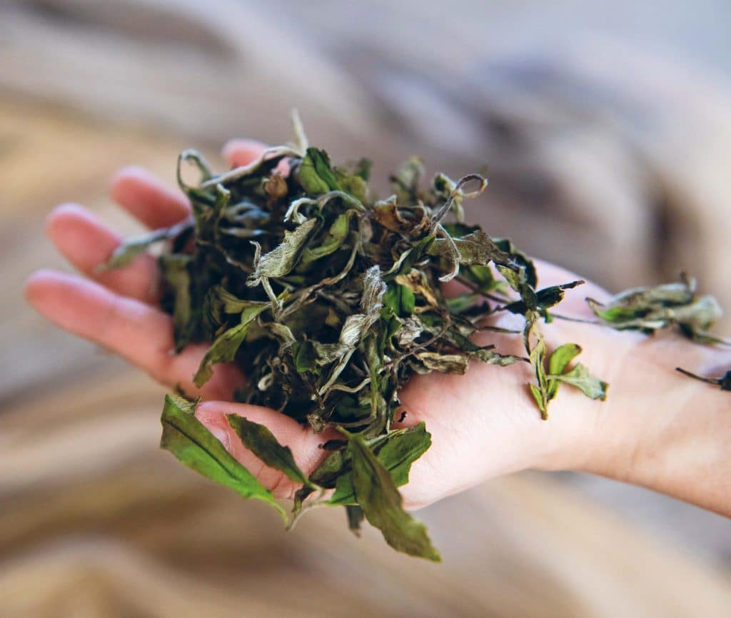 sustainably sourced tea